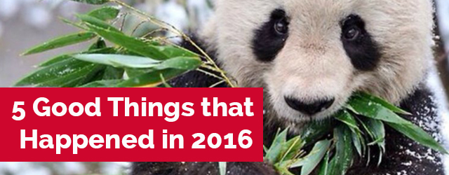 Good things that happened in 2016