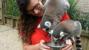 Zookeeper with lemurs