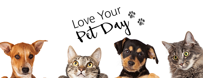 Love your pets title banner