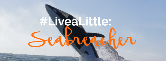 Livealittle Seabreacher Featured