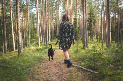 lady and a dog on a woodland walk